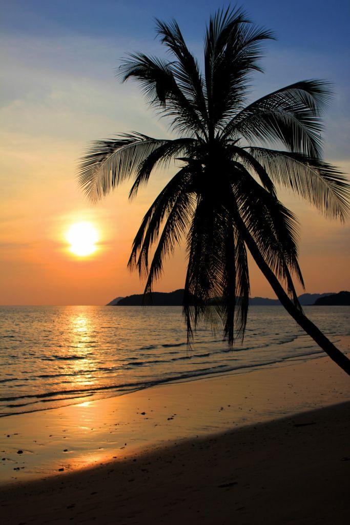 palm-tree-beach